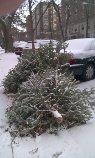 Trees curbside in winter